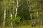 http://vuedumonde.hautetfort.com/media/02/02/2109784997.jpg